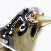 grey-bird-pinl-flowers-thumb-100